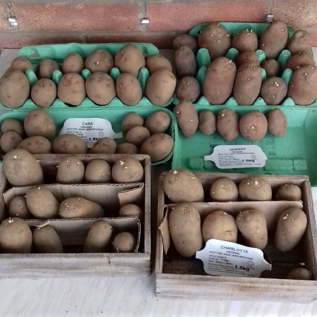 chitting potatoes feb 18